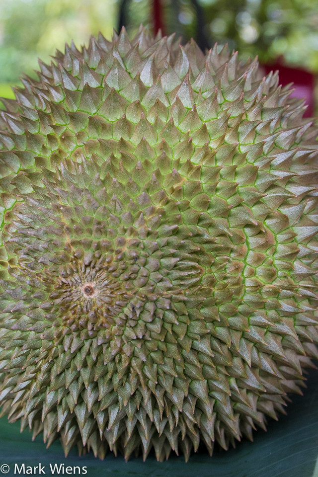 durian thailand 61 X2 Durian Garden of Eden   Eating the King Of Fruits in Nonthaburi