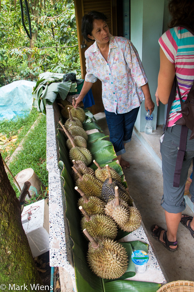 Durian at the farm