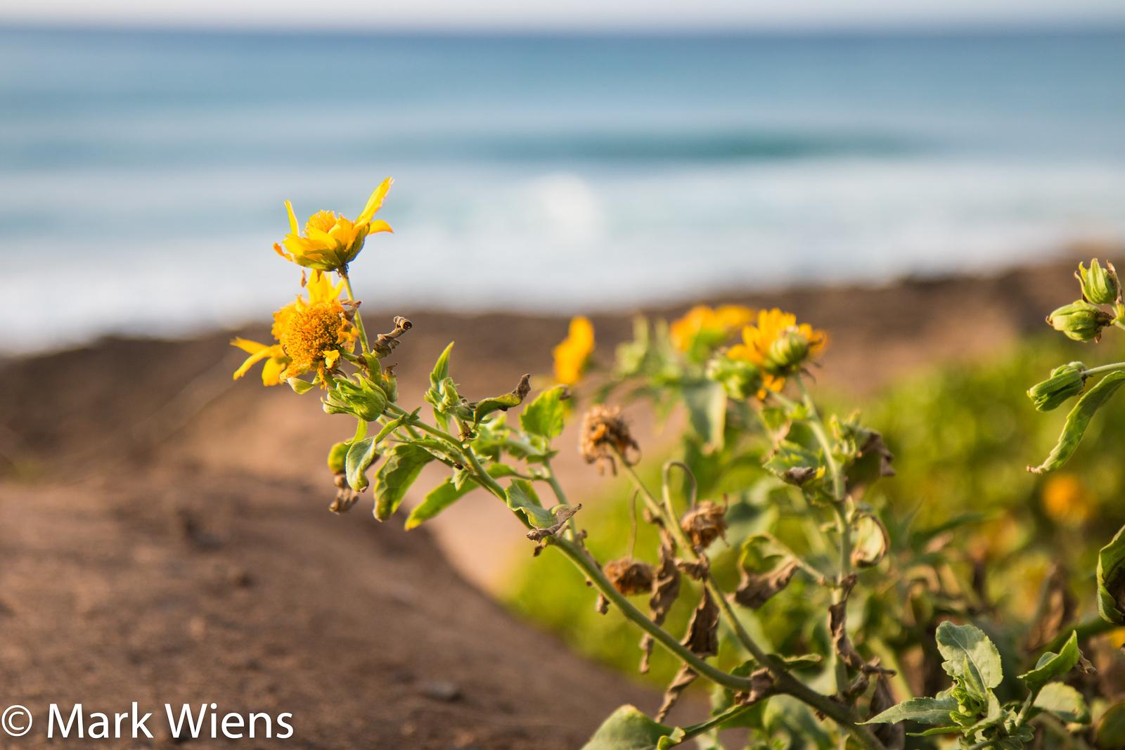 hiking in Oahu
