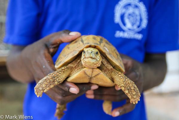 Mnarani Turtles Conservation